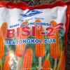 Menanam Jagung Hibrida BISI-2 Secara TOT