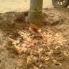 Cara Membersihkan Rumput Semak dan Pohon pada Tanah Kavlingan