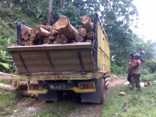 Harga-Kayu-Jati-Terbaru_Biaya_Angkut-kayu-jati