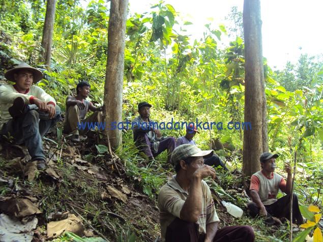 Proses Persiapan Lahan untuk Tanaman Karet, Pekerja sedang beristirahat dibawah pohon jati yang belum dipanen.