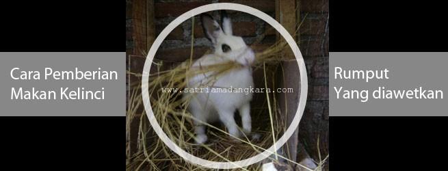 Cara Pemberian Makan Ternak Kelinci