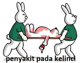 Penyakit dan Hama pada Kelinci