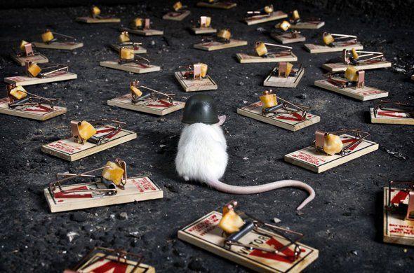 Tips Mengusir Tikus Dari Rumah Dengan Mudah