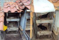 Kandang Ayam Indukan untuk Proses Pengeraman