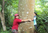 Memindahkan Pohon Besar sejauh 100 KM