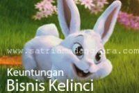Beternak Kelinci sebagai Usaha Sampingan