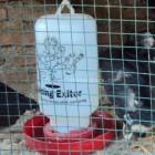 Tempat Minum Ayam
