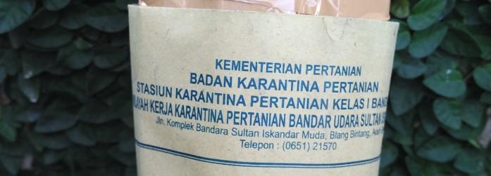 Selain rapih kemasan pakingnya, ternyata juga dibekali surat jalan dari Kementerian Pertanian Stasiun Karantina Pertanian Kelas I Banda Aceh.